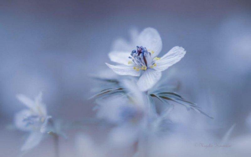 Цветы - главные герои кадра - №7