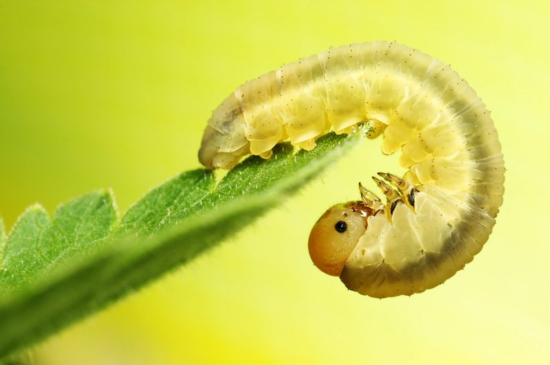 Мир насекомых - №8