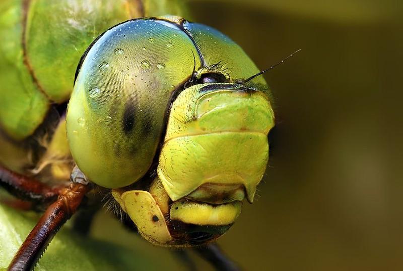 Мир насекомых - №11