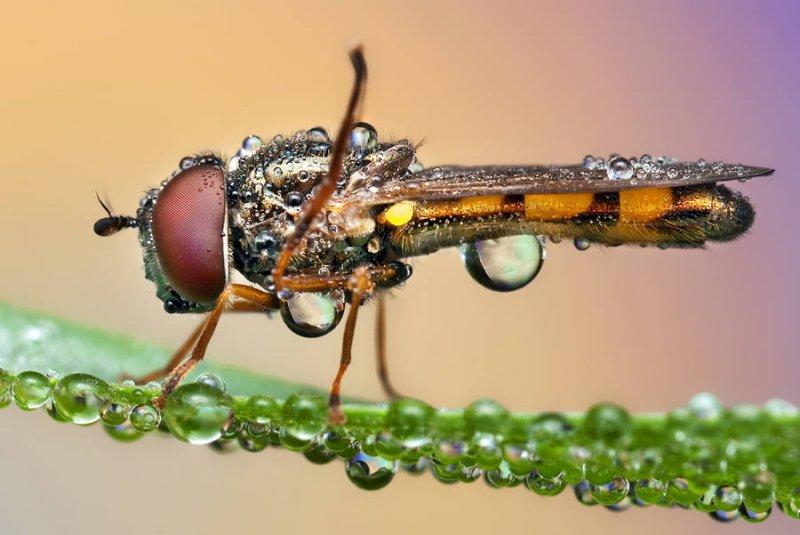 Мир насекомых - №15