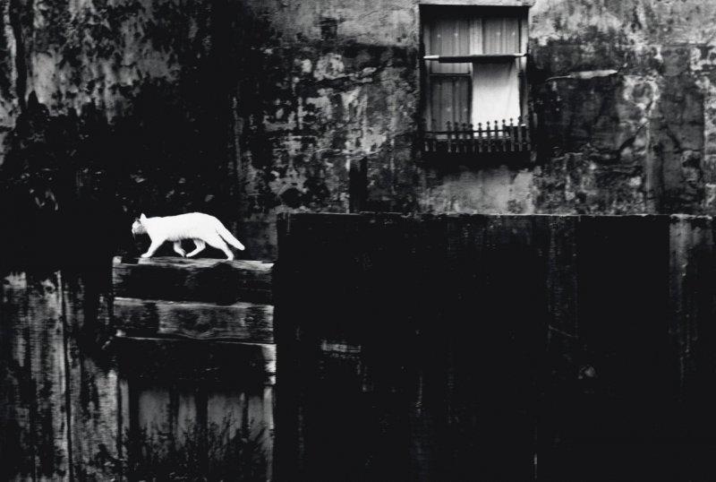 Фотограф Пьерджорджо Бранци - №8