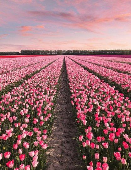 Фотографии из Нидерландов - №9