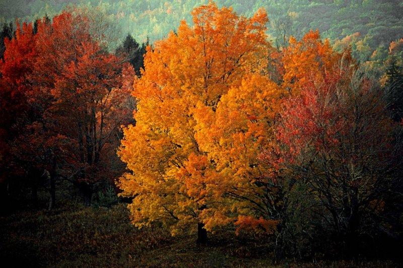 Портреты деревьев - №8