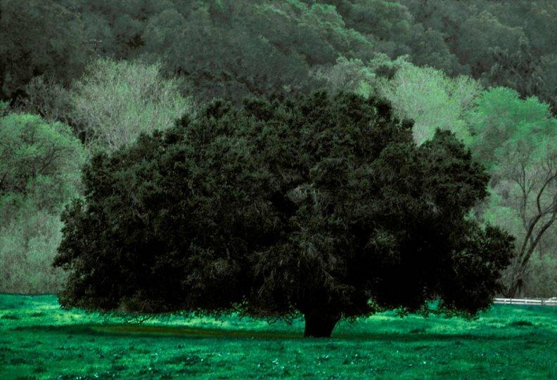 Портреты деревьев - №15