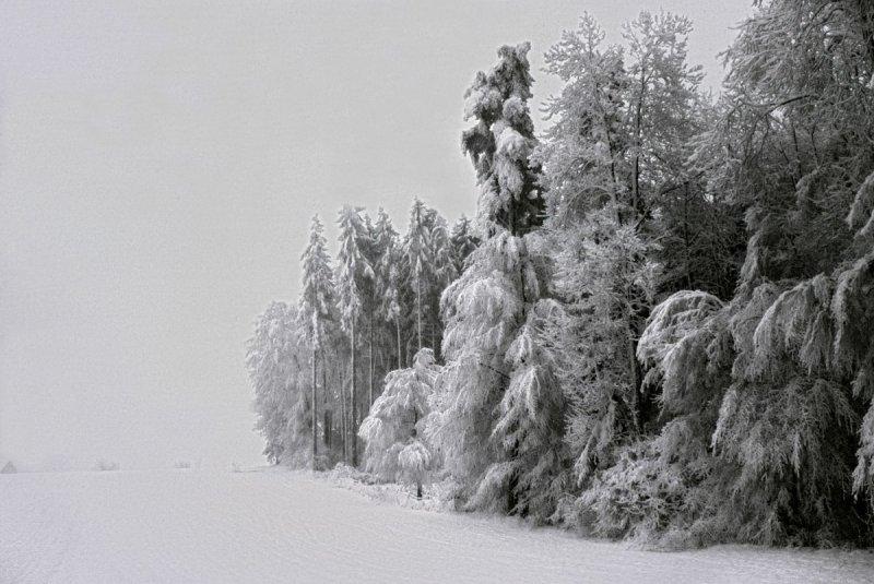 Портреты деревьев - №10