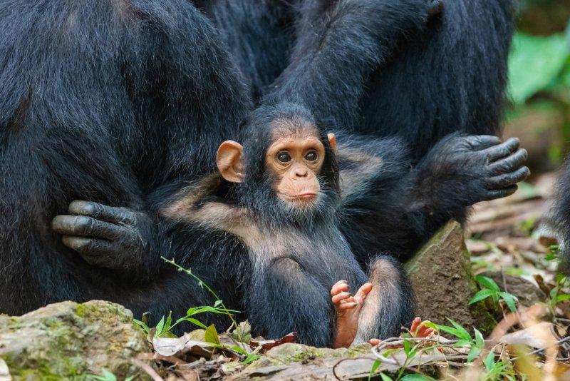 Фотографии животных - №1
