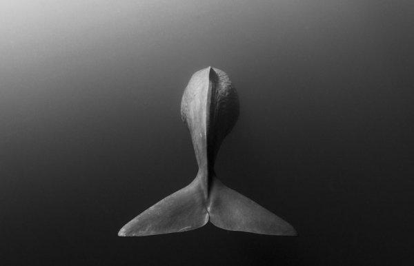 Новости в фотографиях - National Geographic Photo Contest 2013 (Часть 2) - №7