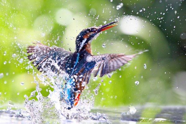 Фото съемка птиц. Лучший момент в кадре - №2