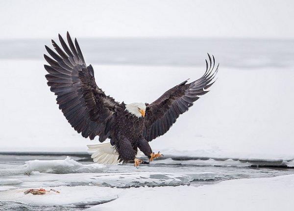 Фото съемка птиц. Лучший момент в кадре - №10