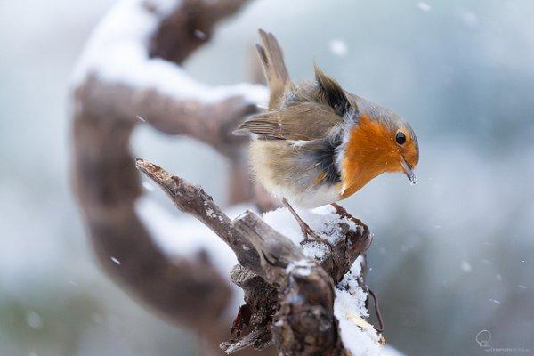 Фото съемка птиц. Лучший момент в кадре - №14