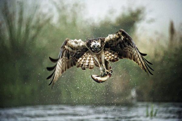 Фото съемка птиц. Лучший момент в кадре - №22