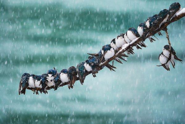 Фото съемка птиц. Лучший момент в кадре - №26