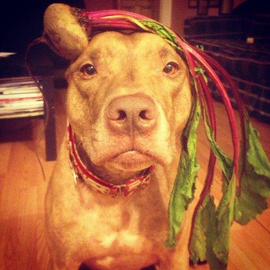 Скаут – самая спокойная в мире собака в блоге Фото юмора - №8