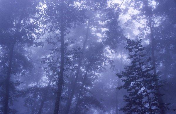 Шон Линч. Инфракрасные фото пейзажи Непала и другие работы  - №6