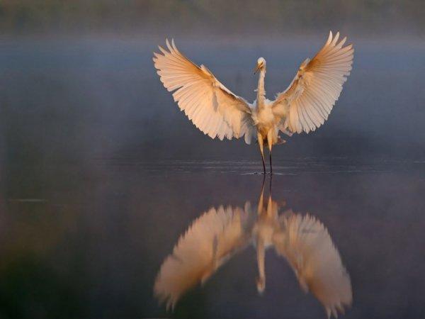 Удивительные и красивые фото кадры природы - №7
