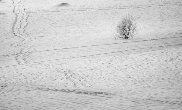 Урок фотографии. Поиск сюжетов для съемки зимой - №6