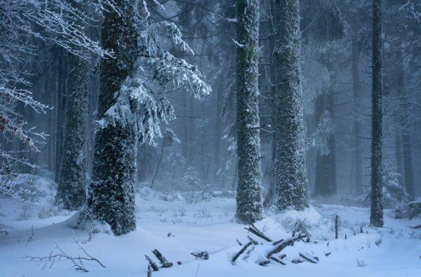 Урок фотографии. Поиск сюжетов для съемки зимой - №10