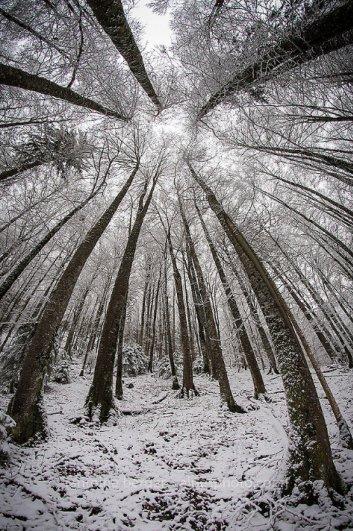 Урок фотографии. Поиск сюжетов для съемки зимой - №14