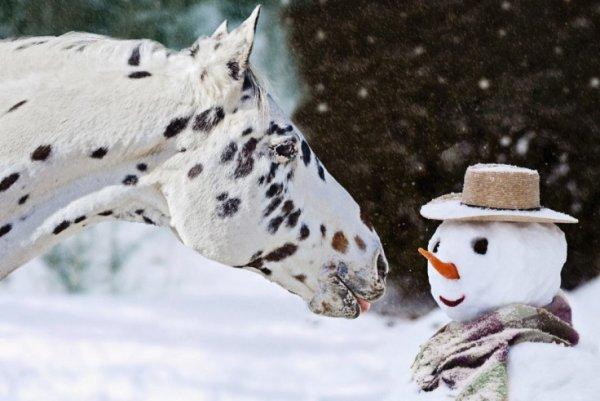 Урок фотографии. Поиск сюжетов для съемки зимой - №22