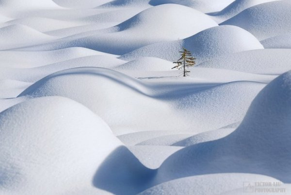 Чувственные фото пейзажи от канадского фотографа Victor Liu - №5
