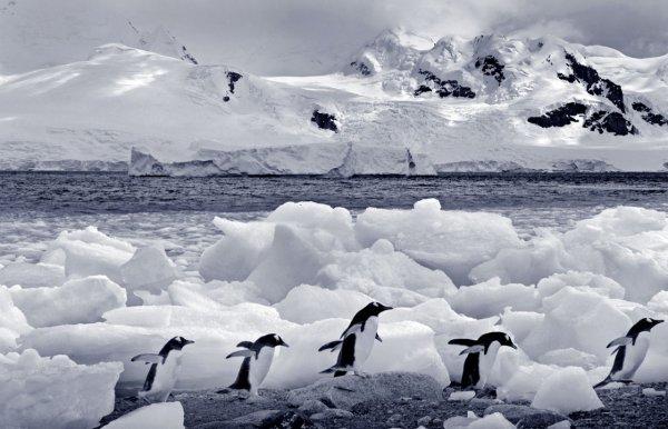 Загадочно спокойный мир Антарктиды - №5