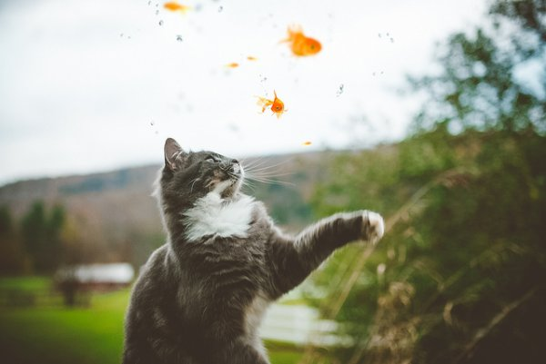 Кошки в восхитительных и милых фото - №3
