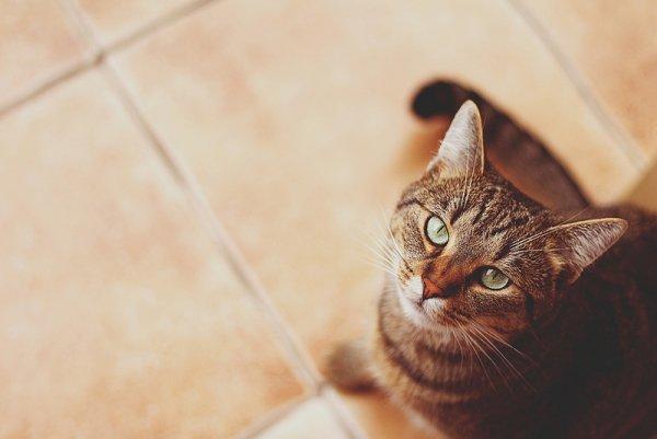 Кошки в восхитительных и милых фото - №7