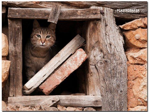 Кошки в восхитительных и милых фото - №11