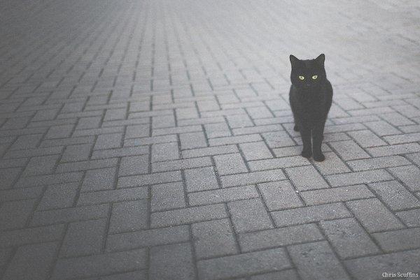 Кошки в восхитительных и милых фото - №15