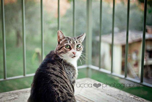 Кошки в восхитительных и милых фото - №19