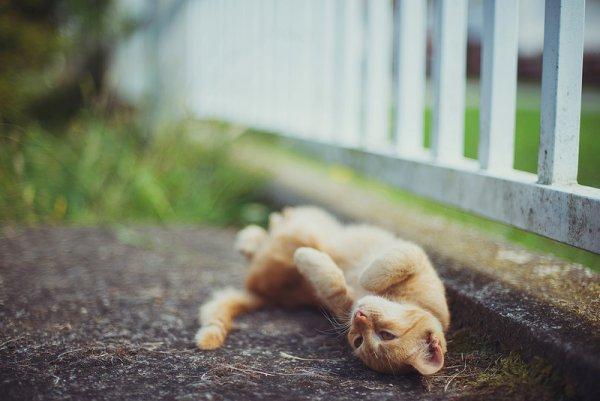 Кошки в восхитительных и милых фото - №23