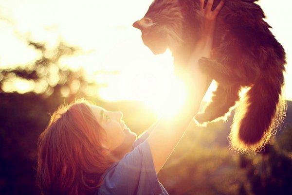 Кошки в восхитительных и милых фото - №27