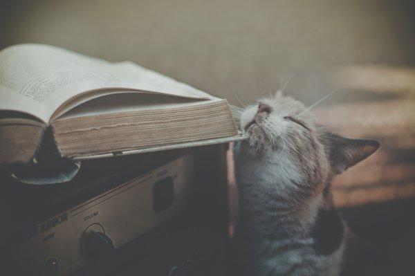 Кошки в восхитительных и милых фото - №31