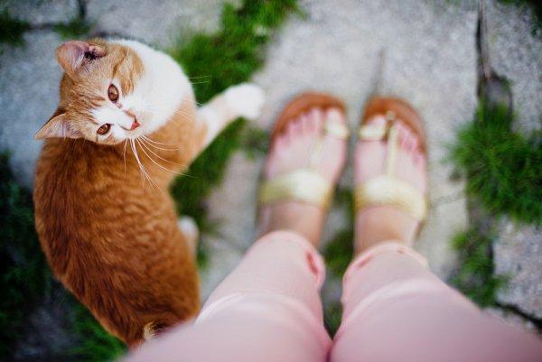 Кошки в восхитительных и милых фото - №39