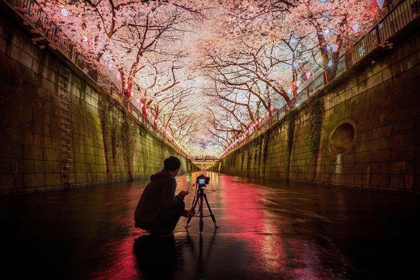 Самые красивые фотографии цветения сакуры - №1