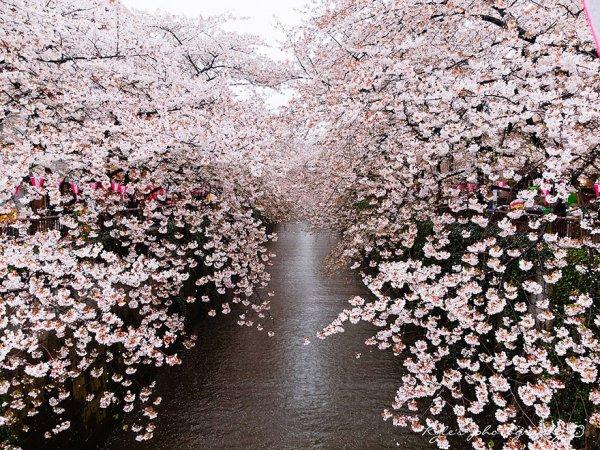 Самые красивые фотографии цветения сакуры - №21