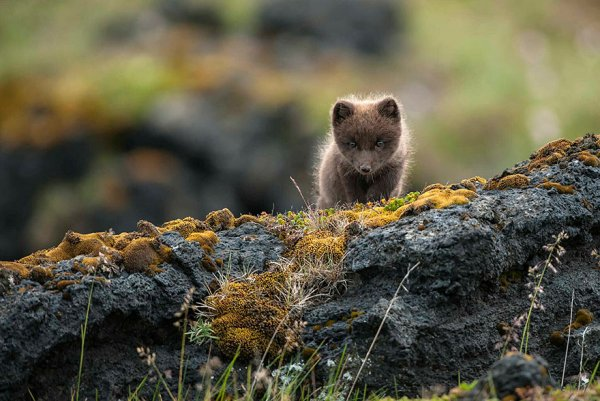 Насладитесь милыми фотографиями рыжей лисы - №9
