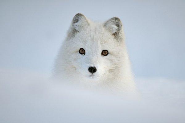 Насладитесь милыми фотографиями рыжей лисы - №21