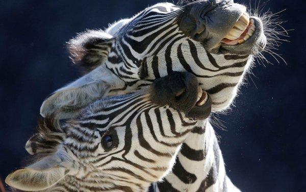 животный мир смотреть
