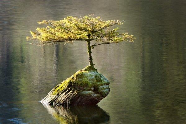 самые удачные кадры - Островок жизни. © Ian Beveridge