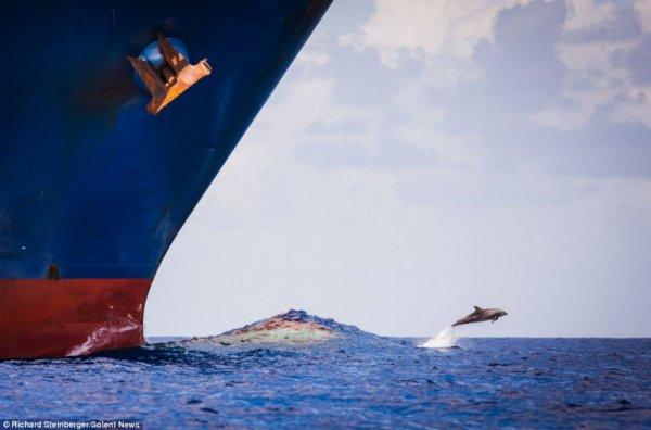 самые удачные кадры - Гонки с кораблем. © Richard Steinberger