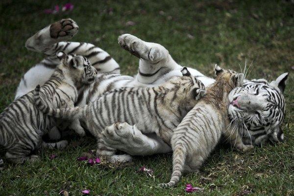 Мир животных