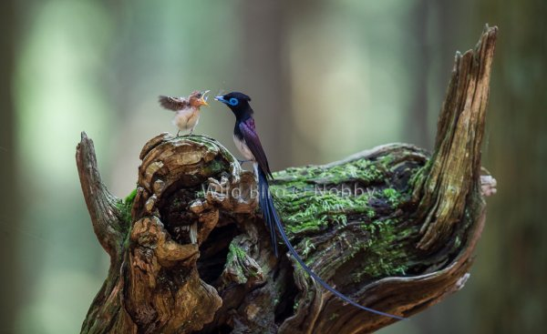 мир дикой природы