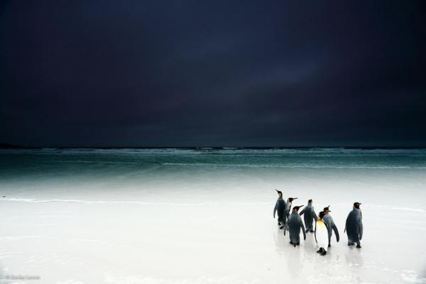Дикая природа © Stanley Leroux