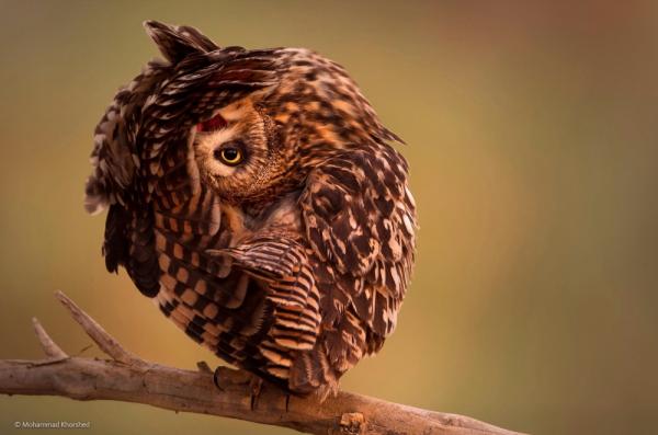 смотреть дикая природа © Mohammad Khorshed