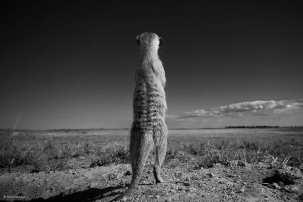 фото дикая природа © Neil Aldridge