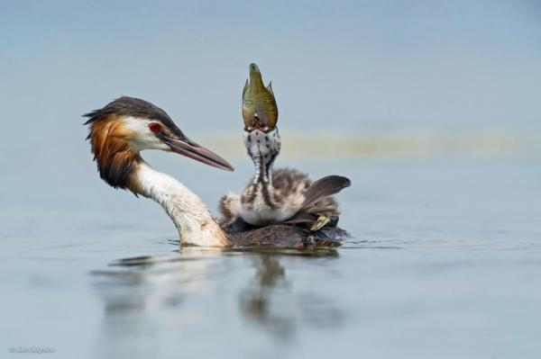 фото дикая природа © Alain Ghignone