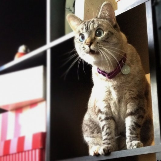 эмоции животных фото кота