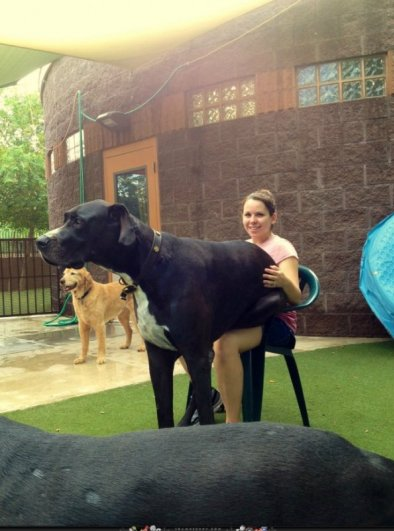 большие собаки фото