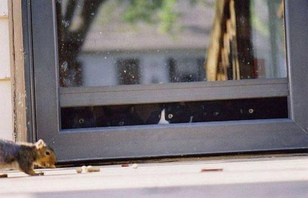 Фотографии кошек